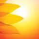 Solarthermie auch zur Heizungsunterstützung