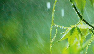 Regenwasser - Nutzung im Einfamilienhaus